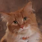 #15 Orange Cat