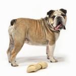 #24 Riley Bulldog