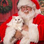Santa Pets web